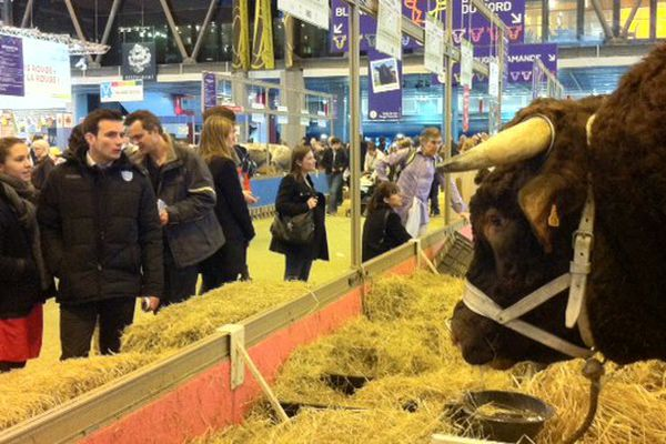 Fêtard, le taureau, pèse près de deux tonnes.