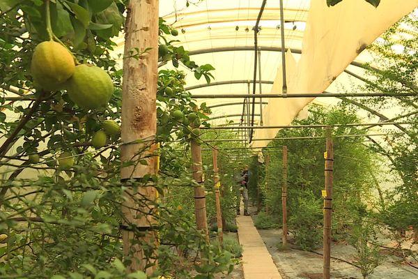 Mathieu Vessières cultive près de 300 espèces sur le terrain familial à Saint-Féliu-d'Avall.