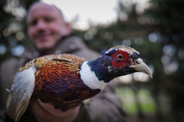 Interdite au début du reconfinement le 29 octobre, la chasse a ensuite été autorisée à partir du 28 novembre. Sans pour autant que cela change franchement la donne pour les éleveurs du Centre-Val de Loire.