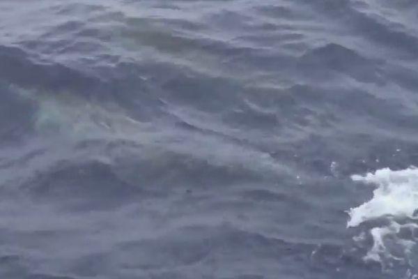 Plusieurs dauphins ont rejoint le bateau de Fabrice Amedeo alors qu'il commence à contourner l'anticyclone des Açores.