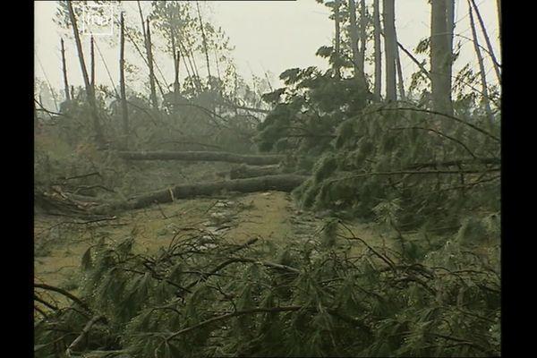 Captures d'images de la tempête Martin en 1999, dans le Médoc, en Gironde.