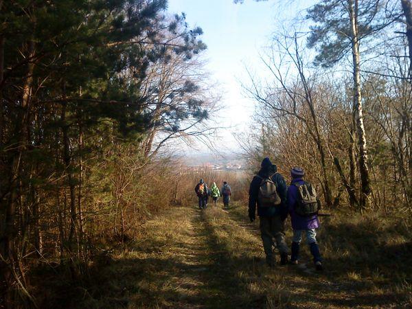 Une promenade à travers le vignoble champenois et la curieuse forêt autour de Chenay.