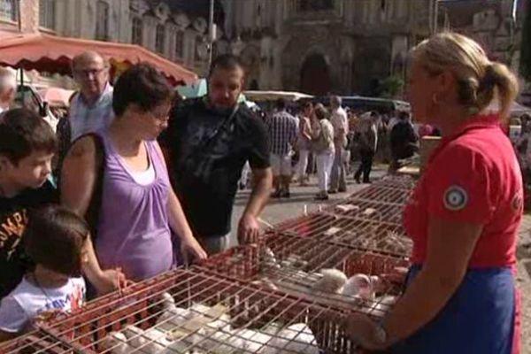 Lisieux, la place de la république accueille la traditionnelle Foire aux picots