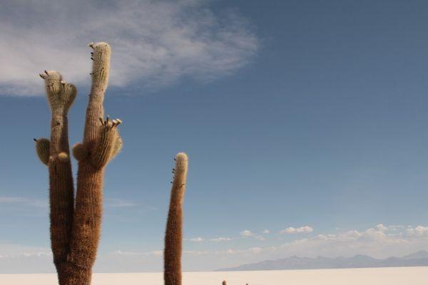 Près de la Cordillère des Andes, un véritable désert blanc à près de 4000 mètres d'altitude, composé de nitrates et chlorures de sodium, de potassium, de magnésium, d'iode, de lithium