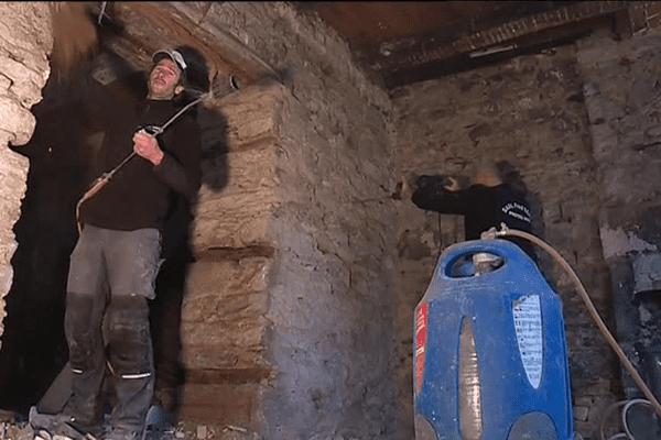 Dans le Finistère, la mérule infeste les murs de nombreuses maisons.