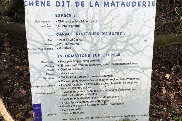 Le panneau d'information situé à proximité du chêne
