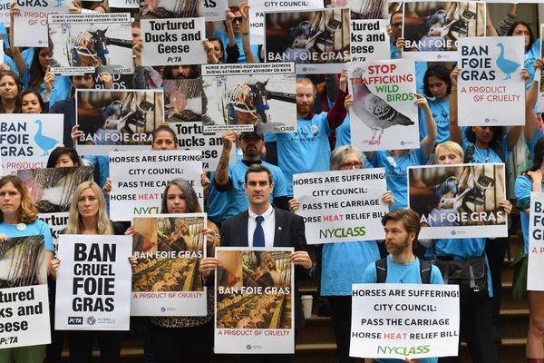 Les militants des droits des animaux ont pesé de tout leur poids afin que le foie gras soit interdit à New York.