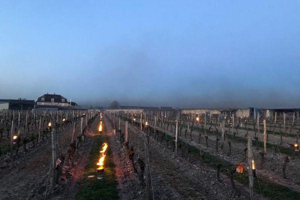 Val de Loire- Domaine les Pins- Contre le gel, Installation dans les vignobles de bougies, des bidons qui diffusent de la paraffine ou de la cire naturelle.
