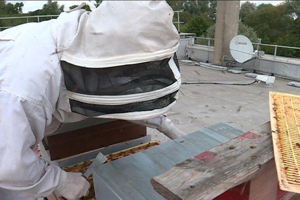 Francis Lerat exploite à présent des ruches sur les toits de l'Intermarché d'Etampes.