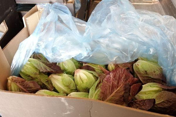 Les sacs d'herbe étaient cachés parmi les caisses de salades saisies par les douaniers.