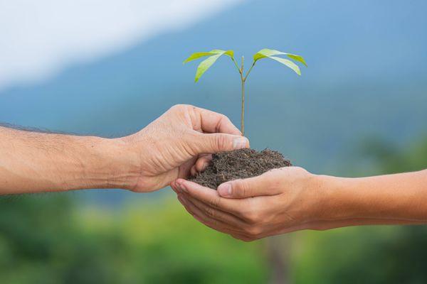 Une plante dans les mains.