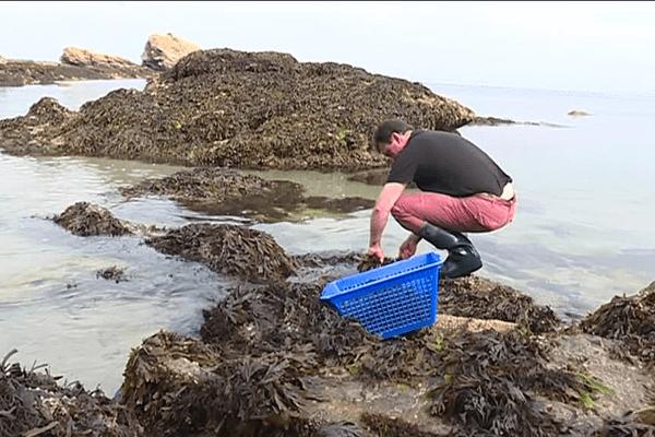 Erwan Tonnerre a créé un élevage d'ormeaux sur l'île de Groix