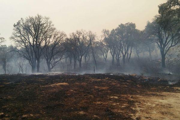 Haute-Corse - A Biguglia, un incendie parti le 24 juillet a détruit près de 2200 hectares de maquis.
