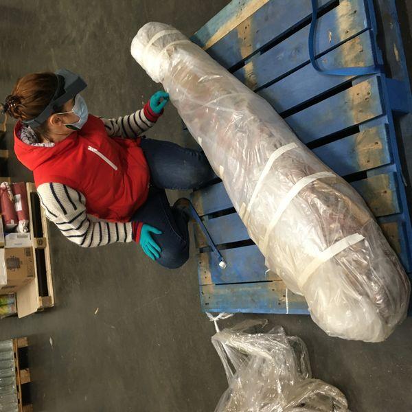 La momie a été emballée pour être transportée à Grenoble.