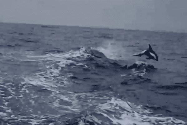 Jean-Pierre Dick fait partager en images sa rencontre avec un dauphin dans l'Océan Pacifique.