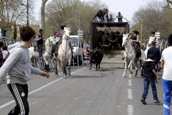 Calendrier Fete Votive 2022 Herault Camargue : les fêtes votives à l'heure du coronavirus dans le Gard