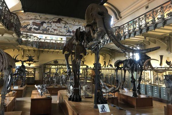 Le mammouth, qui vivait il y a 1 million d'années, a été retrouvé en 1869 à Durfort dans le Gard.