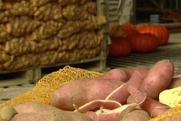 Damien et Françoise Adam se retrouvent avec 150 tonnes de pomme de terre sur les bras.