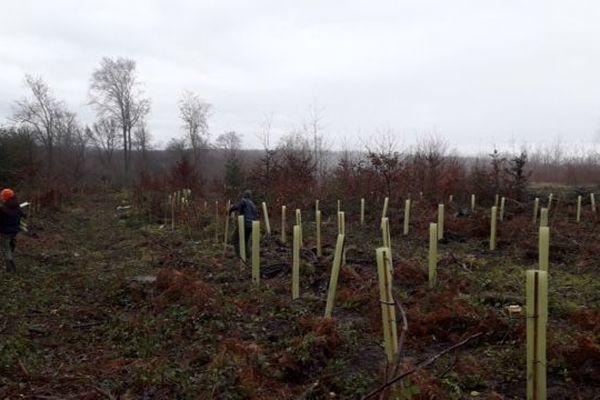 En forêt de Retz dans l'Aisne, l'ONF a organisé une plantation d'arbres avec des jeunes du lycée d'Airion pour es sensibiliser à ses métiers.