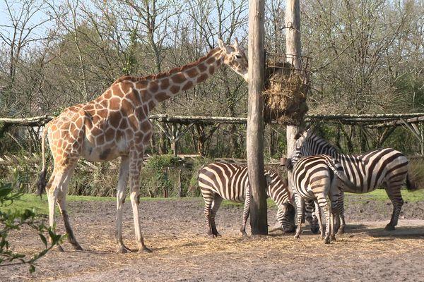 Notre série de la semaine vous invite dans les coulisses du Zoo de Bordeaux Pessac qui ouvre de nouveau ses portes le 19 mai 2021.