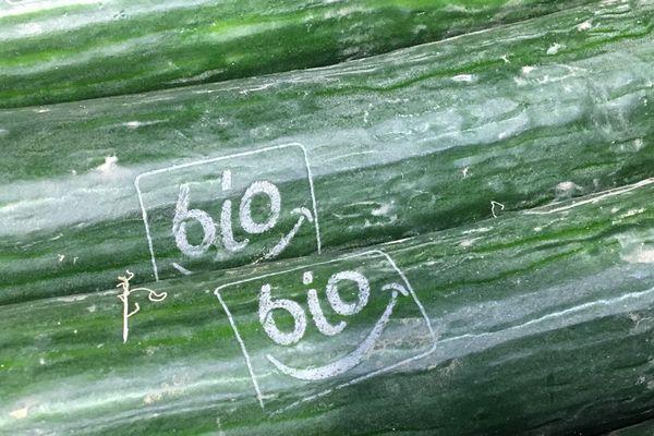 L'éco-orgasme : vive le concombre