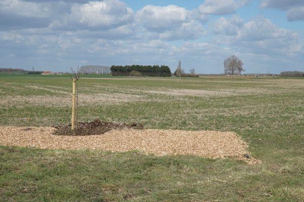 Le pommier planté sur la parcelle à Quétigny qui servira de base pour le verger bio