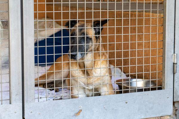 Un chien abandonné à la SPA de Belfort - Photo d'illustration