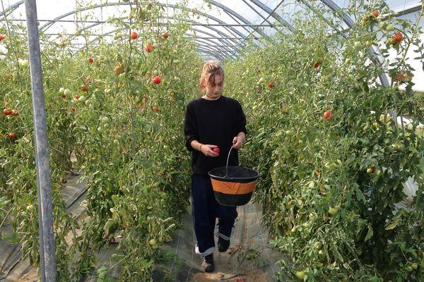 Quand jardiner devient un outils de réinsertion (Mâcon, Saône-et-Loire)