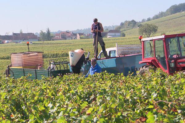 Le secteur viticole peine à trouver des vendangeurs chaque année.