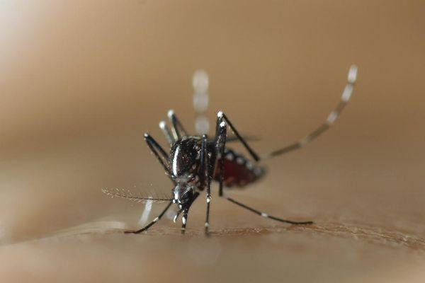 Il est conseillé d'éviter d'avoir des eaux stagnantes autour de son domicile pour limiter la prolifération de moustiques.