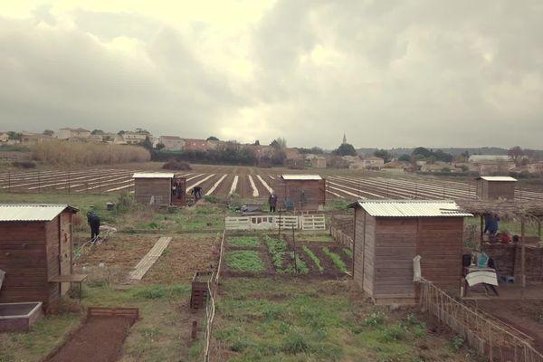 Les jardins partagés de Montagnac, dans l'Hérault  : 40 parcelles réservées aux habitants qui ne possèdent pas de terrain. Une formule qui connait de plus en plus d'adeptes, surtout depuis la crise sanitaire.