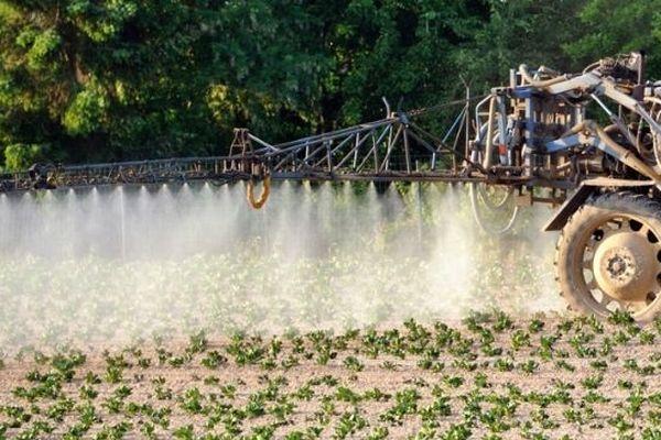 Épandage de pesticides sur un champ de pommes de terre;
