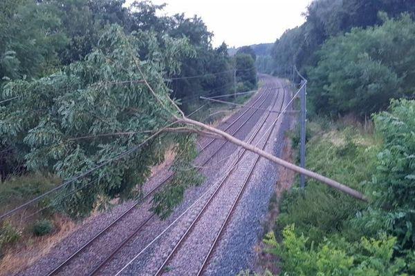 De nombreux arbres sont tombés sur les voies dans la nuit.