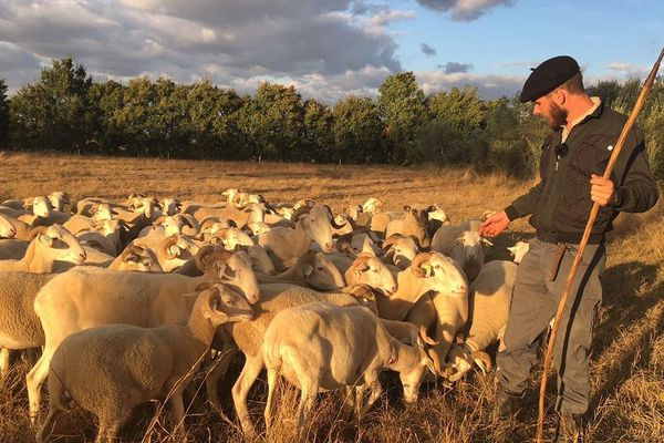 Les éleveurs tarnais sont très préoccupés par l'arrivée probable du loup dans le département.