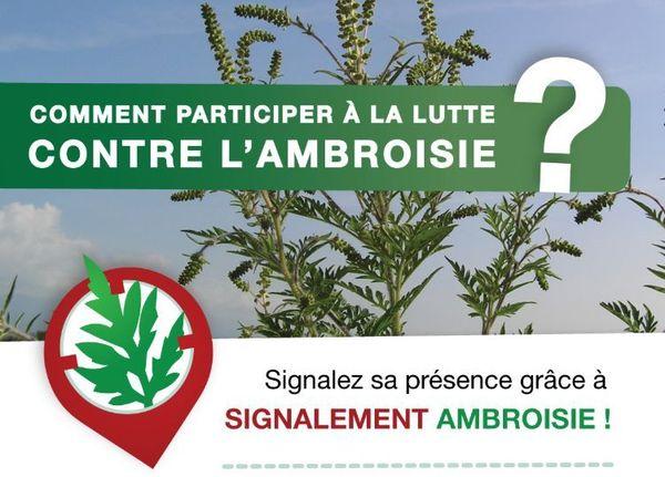 Le site internet Signalement ambroisie permet au public de signaler les zones infestées par des plants d'ambroisie.
