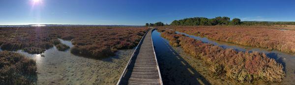 Entre la forêt des Aresquiers et la mer, les abords de l'étang d'Ingril ont été aménagés de passerelles pour en garantir l'accessibilité par tous temps.