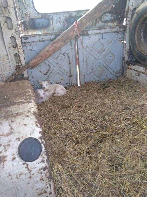 Le propriétaire élevait à peu de frais des animaux pour sa consommation personnelle selon l'association UMA.