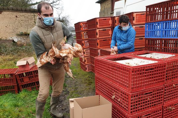 Thomas Dano et Benjamin Forestier ont sauvé 1100 poules ce samedi à Langouët