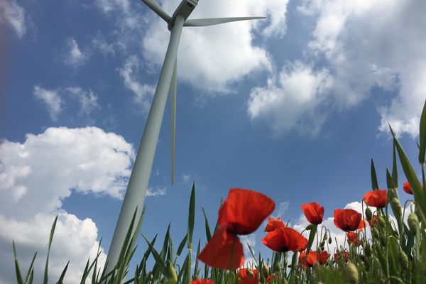 Une éolienne et un champ de coquelicots.