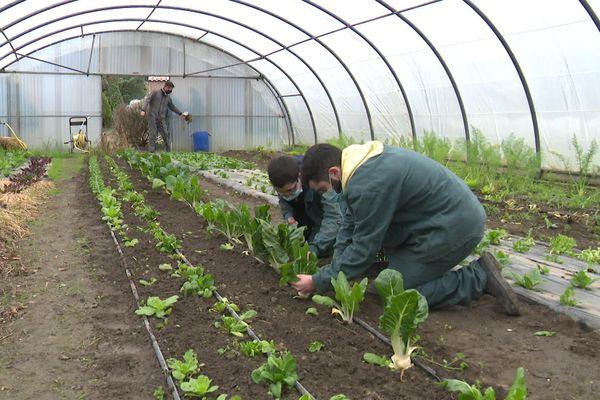 La nouvelle génération d'agriculteurs se prépare au Lycée agricole Charlemagne de Carcassonne