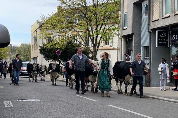 Pas peu surpris les Mulhousiens ce samedi, de voir passer des vaches dans les rues de leur ville