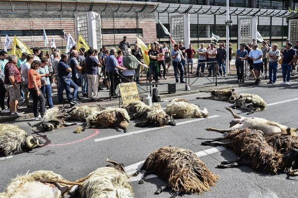 Des bergers basques et béarnais ont déposé des corps de brebis devant la sous-préfecture de Bayonne le 2 septembre 2019.