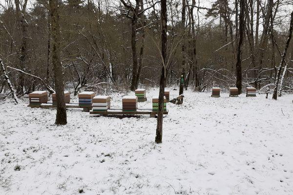 De fortes gelées, puis un printemps frais et pluvieux, sale temps pour les abeilles!