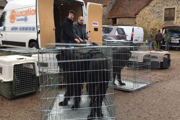 Des cadavres de chiens et de chats ont été retrouvés chez un éleveur de Maligny. Les animaux survivants ont été recueillis par plusieurs associations.