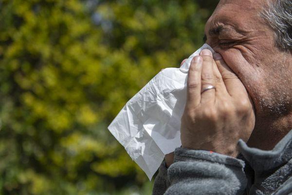 Allergies aux pollens