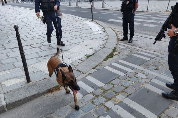 Un chien renifleur, aux côtés des forces de l'ordre.