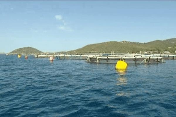 Ferme aquacole de Gloria Maris : 800 tonnes de poissons produits chaque année.