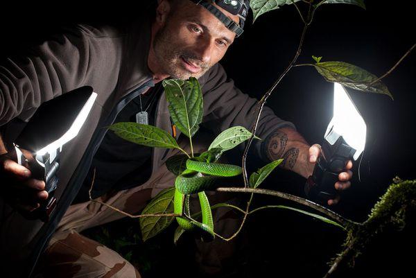 """Le photographe marche beaucoup la nuit pour débusquer les serpents et les """"bêtes qui font peur !"""""""