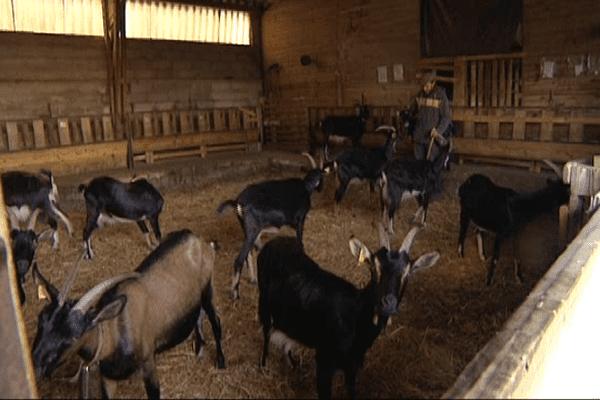 L'exploitation agricole de Serrabone va pouvoir être sauvée grâce à l'épargne solidaire.