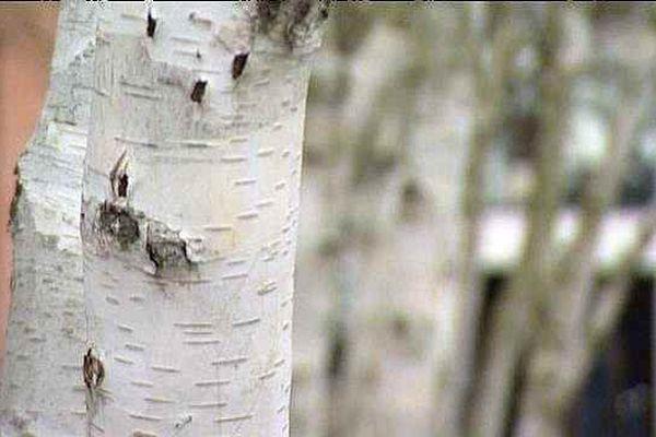 Paysages spécial biennale de l'arbre à Blois